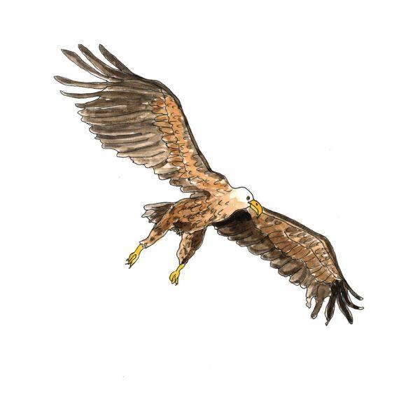 illustration of a golden eagle