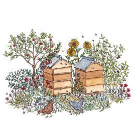 Watercolour drawing of beehives and hens in a garden
