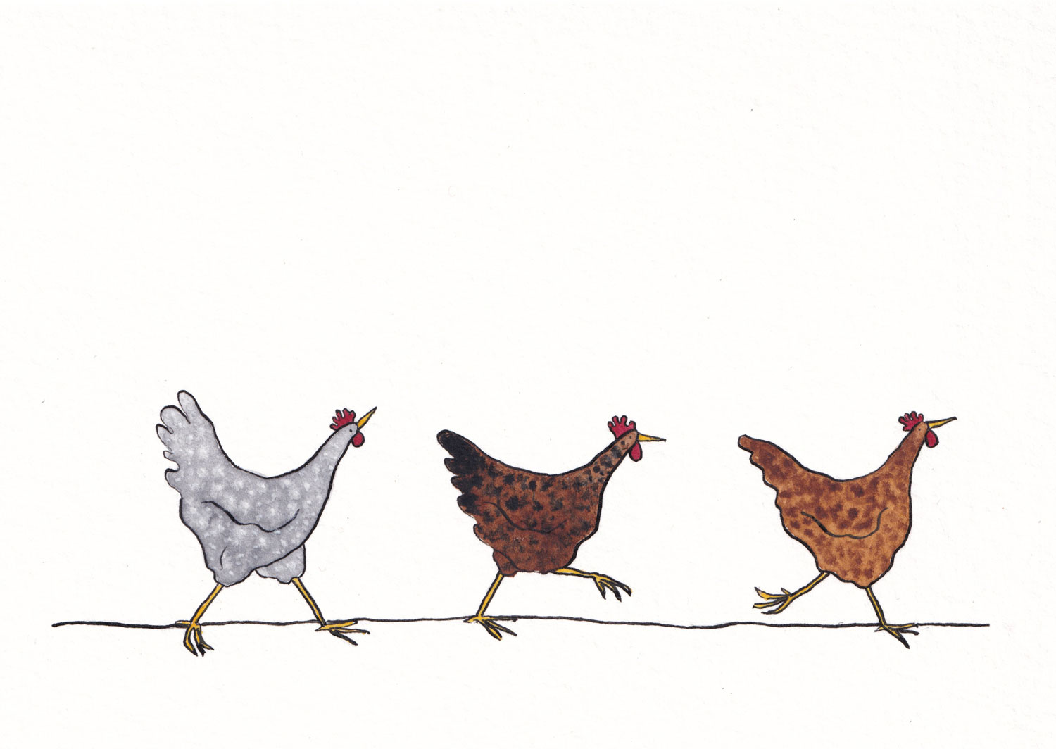 drawing of three hens in watercolour