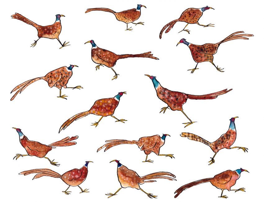 Watercolour and ink drawings of some quirky pheasants