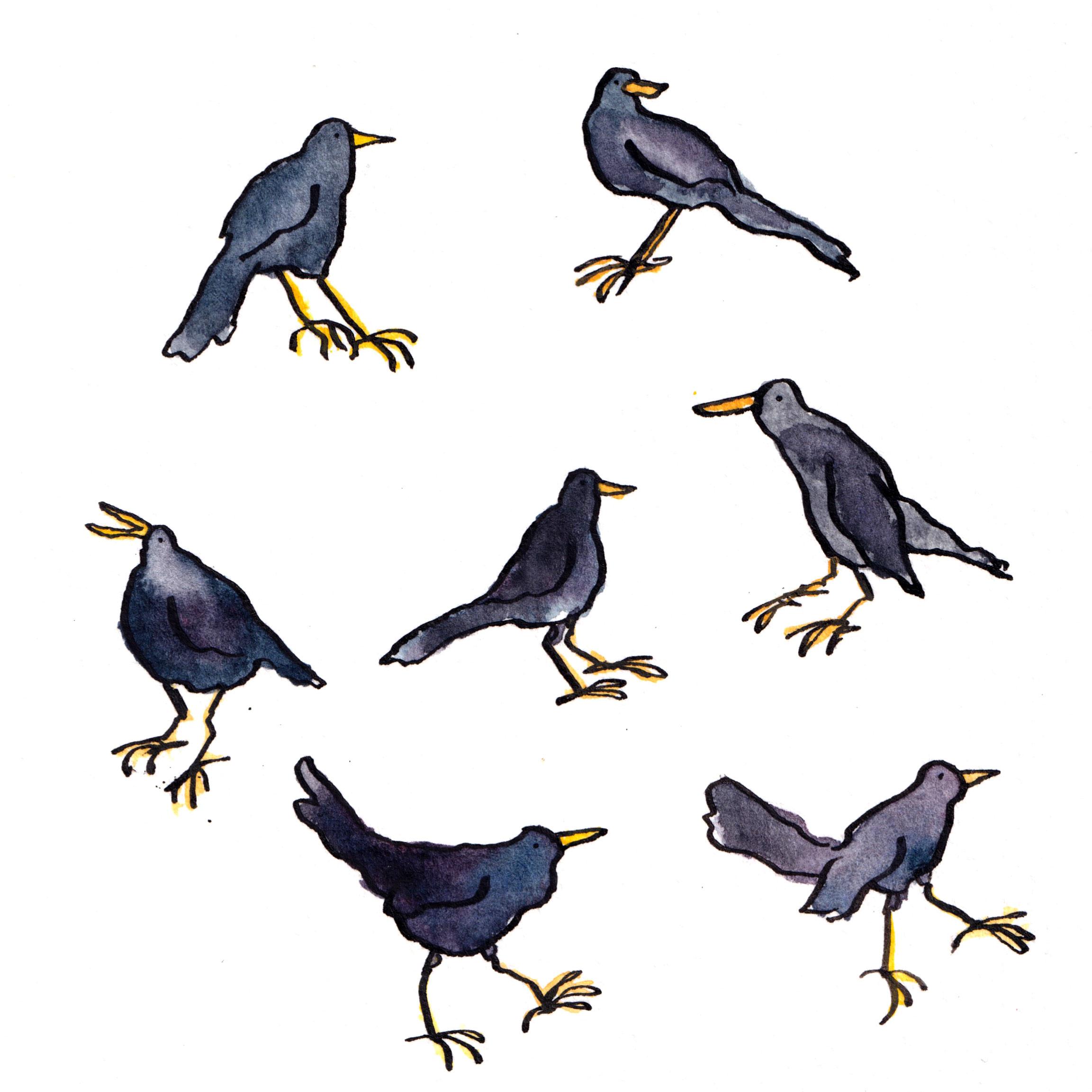 Watercolour drawing of seven tiny blackbirds