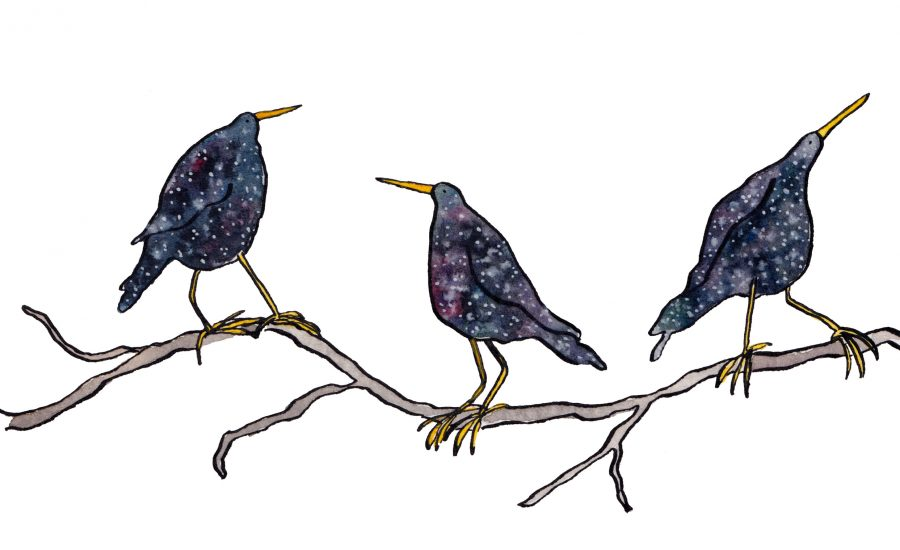 Watercolour illustration of three starlings. The colours look like stars in a night sky.