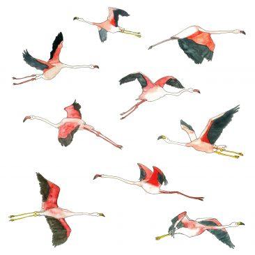 Hand drawn flamingoes in flight
